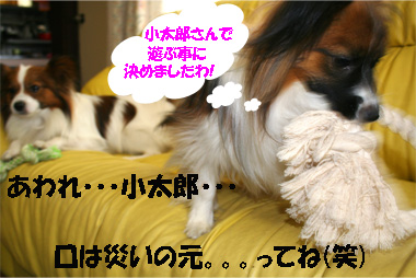 yuzukota070329-2.jpg