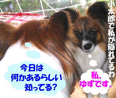 yuzukota070406-1.jpg