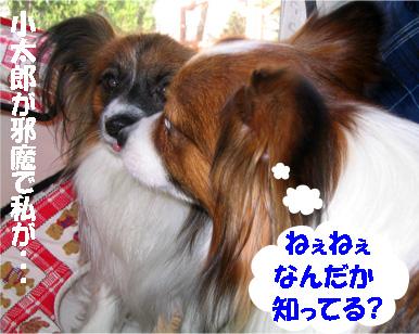 yuzukota070406-2.jpg