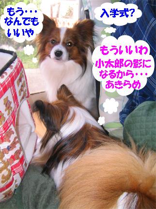 yuzukota070406-3.jpg