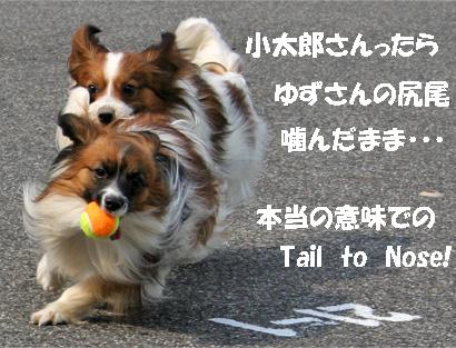 yuzukota070410-2.jpg