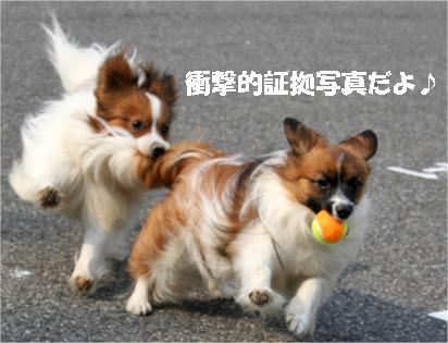 yuzukota070410-3.jpg