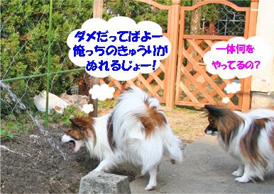 yuzukota070411-1.jpg