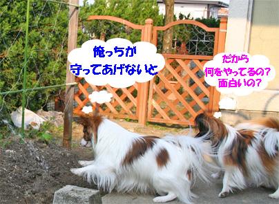 yuzukota070411-2.jpg