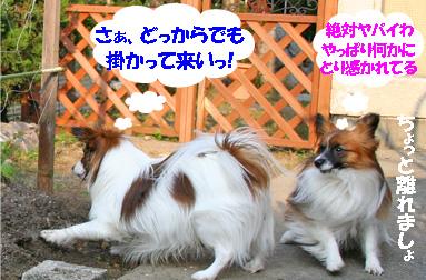 yuzukota070411-3.jpg
