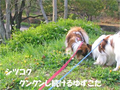 yuzukota070413-1.jpg