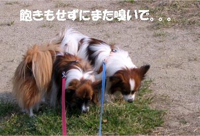 yuzukota070413-2.jpg