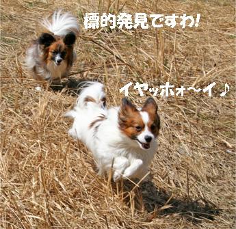 yuzukota070416-1.jpg