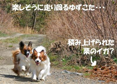 yuzukota070416-4.jpg