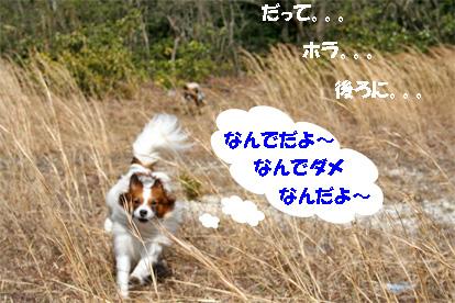 yuzukota070418-1.jpg