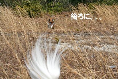 yuzukota070418-2.jpg