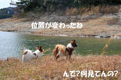 yuzukota070419-1.jpg