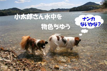 yuzukota070419-2.jpg