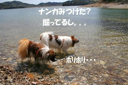 yuzukota070419-3.jpg