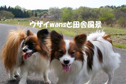 yuzukota070420-1.jpg