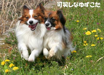 yuzukota070420-2.jpg