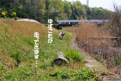 yuzukota070420-3.jpg