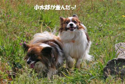 yuzukota070420-4.jpg
