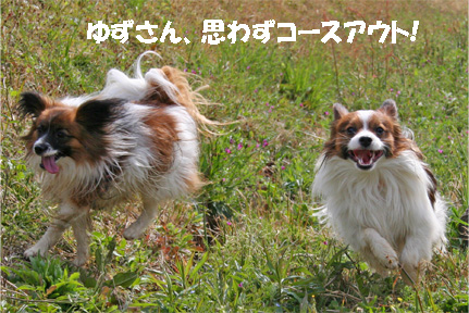yuzukota070420-5.jpg