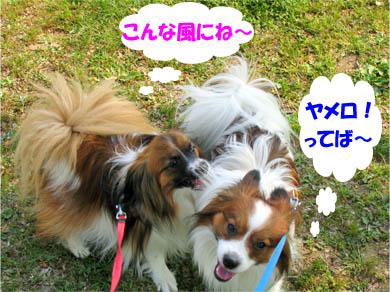 yuzukota070426-1.jpg