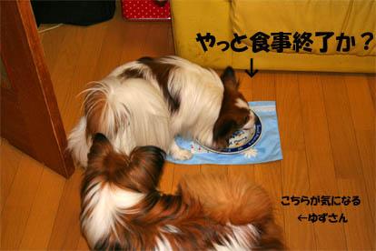 yuzukota070429-1.jpg