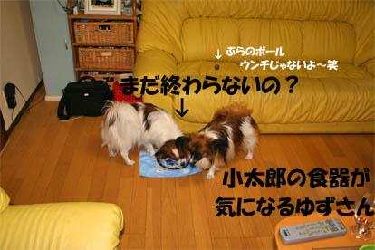 yuzukota070429-2.jpg