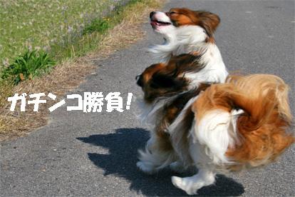 yuzukota070501-1.jpg
