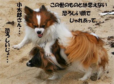 yuzukota070511-1.jpg