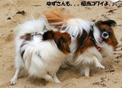 yuzukota070511-2.jpg