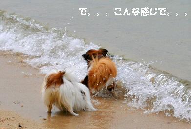 yuzukota070512-1.jpg