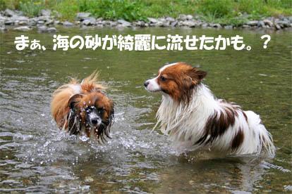 yuzukota070514-1.jpg