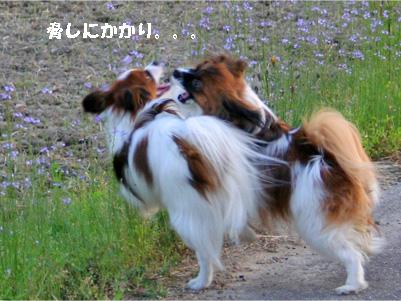 yuzukota070516-10.jpg
