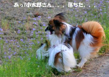 yuzukota070516-11.jpg