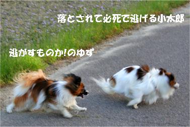 yuzukota070516-12.jpg