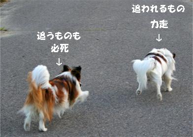 yuzukota070516-13.jpg