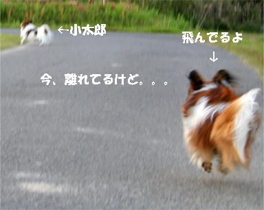 yuzukota070516-14.jpg