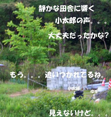 yuzukota070516-16.jpg