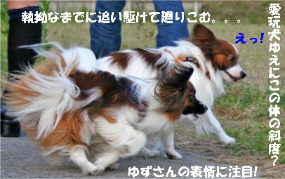 yuzukota070516-2.jpg