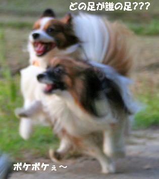 yuzukota070516-7.jpg