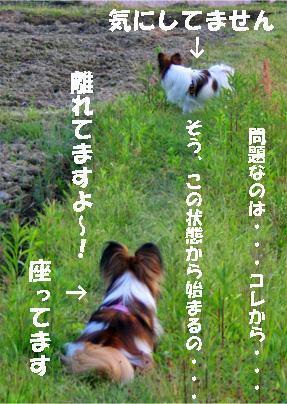yuzukota070516-8.jpg