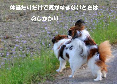 yuzukota070516-9.jpg