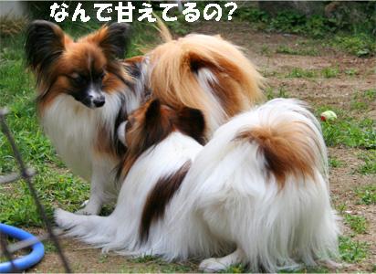 yuzukota070529-1.jpg