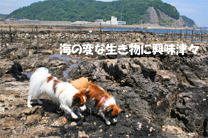 yuzukota070604-4.jpg
