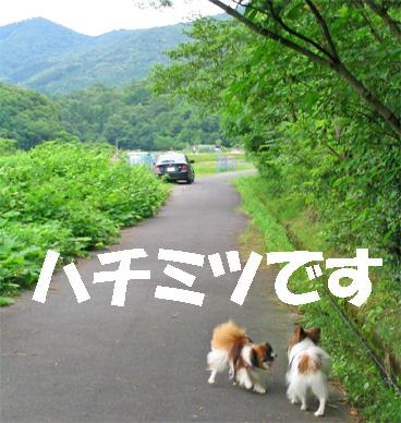 yuzukota070702-1.jpg