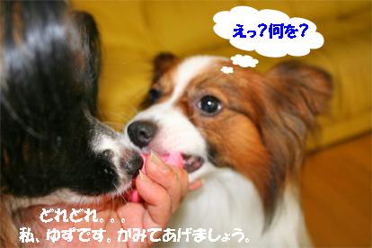 yuzukota070711-1.jpg
