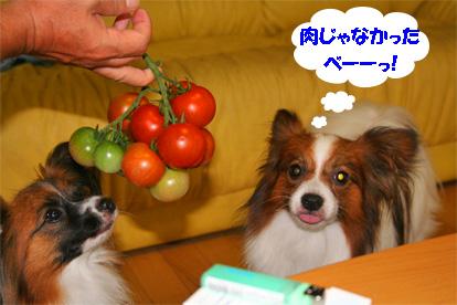 yuzukota070712-1.jpg