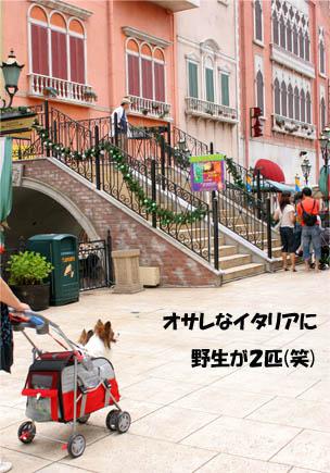 yuzukota070717-9.jpg