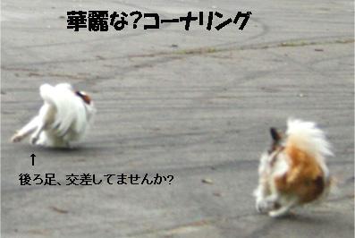 yuzukota070725-3.jpg