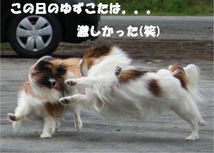 yuzukota070725-5.jpg