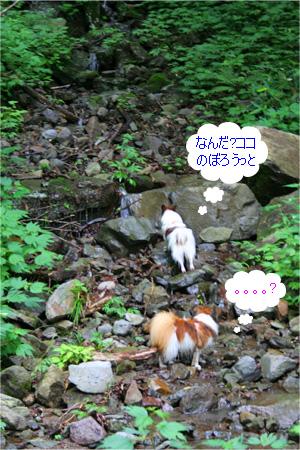 yuzukota070726-1.jpg